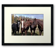 Did you hear about Old Bessy? Framed Print