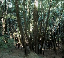Forest 8 by Furiarossa