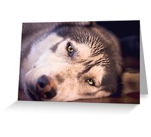 Shadow the husky malamute cross Greeting Card