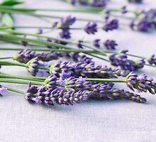 Lavender by GryThunes