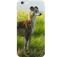 Sunny Afternoon Walk iPhone Case/Skin