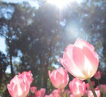 Pink Tulips of Araluen  by Samantha Mercado