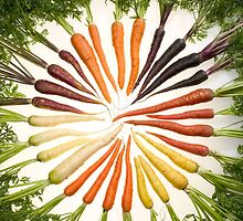 Carrot Color Wheel  by BravuraMedia