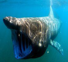 Basking shark  by BravuraMedia
