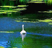 Swan Lake by Gilda Axelrod