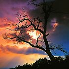 OAK TREE, SUNSET by Chuck Wickham