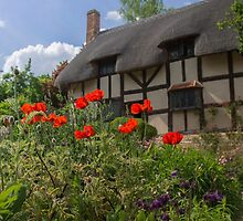 Ann Hathaway's Cottage, Stratford Upon Avon, UK by Pauline Tims