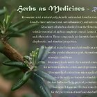 Herbs as Medicine: Rosemary by cdwork