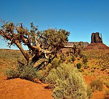 Pinyon-juniper by JohnDSmith