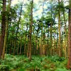 Delamere Forest trees in  early September by Debra Kurs