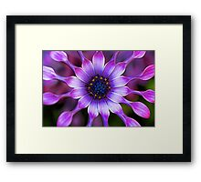 Soprano - Lilac Spoon African Daisy Framed Print