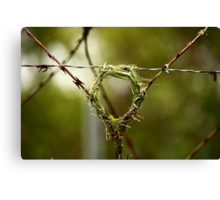 If life hands you razor wire - build a nest on it Canvas Print