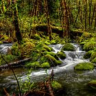 All That Green by Charles & Patricia   Harkins ~ Picture Oregon