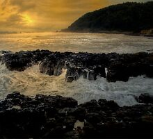 Out In The Wilds ~ Oregon Coast ~ by Charles & Patricia   Harkins ~ Picture Oregon