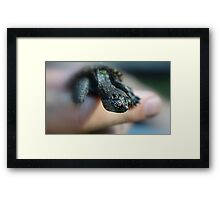 Baby Snapping Turtle Framed Print