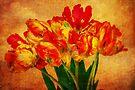 Nostalgic Tulips by Kasia-D