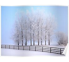 Frozen Poplar Trees II, Northern Ireland Poster