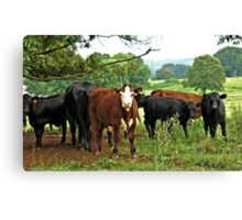 ...Goin'a do what, Cowboy? You're in Cowtown Now! Canvas Print