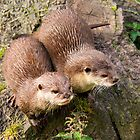 Asian Otters by M.S. Photography/Art