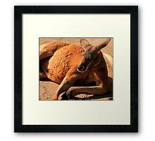 Red Kangaroo Framed Print