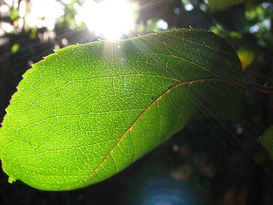 Sunburst in Green - Sunrise through a Leaf by BlueMoonRose