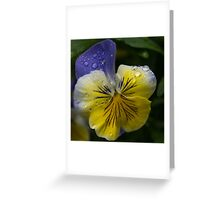 Cheerfuly Wet  Greeting Card
