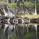 Reflections Along Melaleuca Creek by Carole-Anne