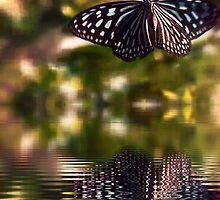 Butterfly reflection by DerekEntwistle