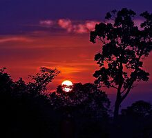 LOOK TO THE BORNEO JUNGLE SUNSET by NICK COBURN PHILLIPS