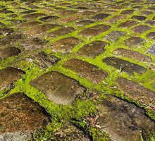 Mossy Cobbles by Sue Martin