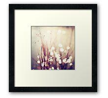 Glimmerings Framed Print