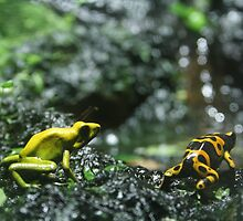 Yellow Frog by CornyMistick