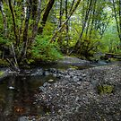 Low Water ~ Whittaker Creek ~ by Charles & Patricia   Harkins ~ Picture Oregon