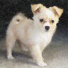 Pomchi Dog   by Oldetimemercan