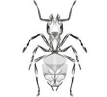 Ant Line Art Illustration by thorstenschmitt