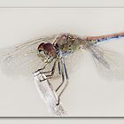 Dragon fly art 01 by kevin chippindall