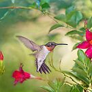 Hummingbird in Late Summer by Bonnie T.  Barry