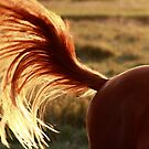 3.9.2014: Horse Tail by Petri Volanen
