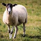 Sheep by JEZ22