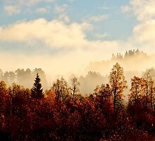 Morning fog in autumn forest by GryThunes