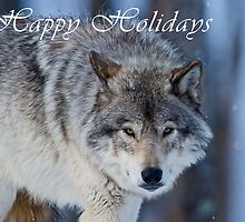 Timber Wolf Holiday Card - 18 by WolvesOnly