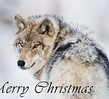 Timber Wolf Christmas Card - English - 19 by WolvesOnly