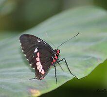 Garden Of Wings by Lorelle Gromus