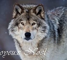 Timber Wolf Christmas Card - French - 20 by WolvesOnly