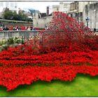 Tower Poppies, London by Veterisflamme