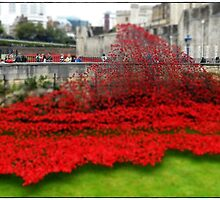 Tower Poppies, London by Veterisflamme