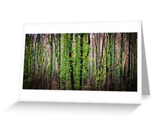 Regrowth, Snowy Mountains Australia Greeting Card
