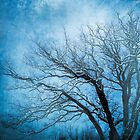 Cold winter by Anne Seltmann