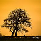 WINTER-TREES-0347 by Paul Foley