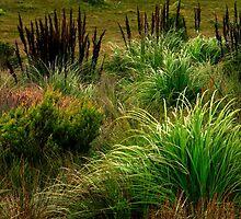 Tarkine's Grassland and One Tree by Angelika  Vogel